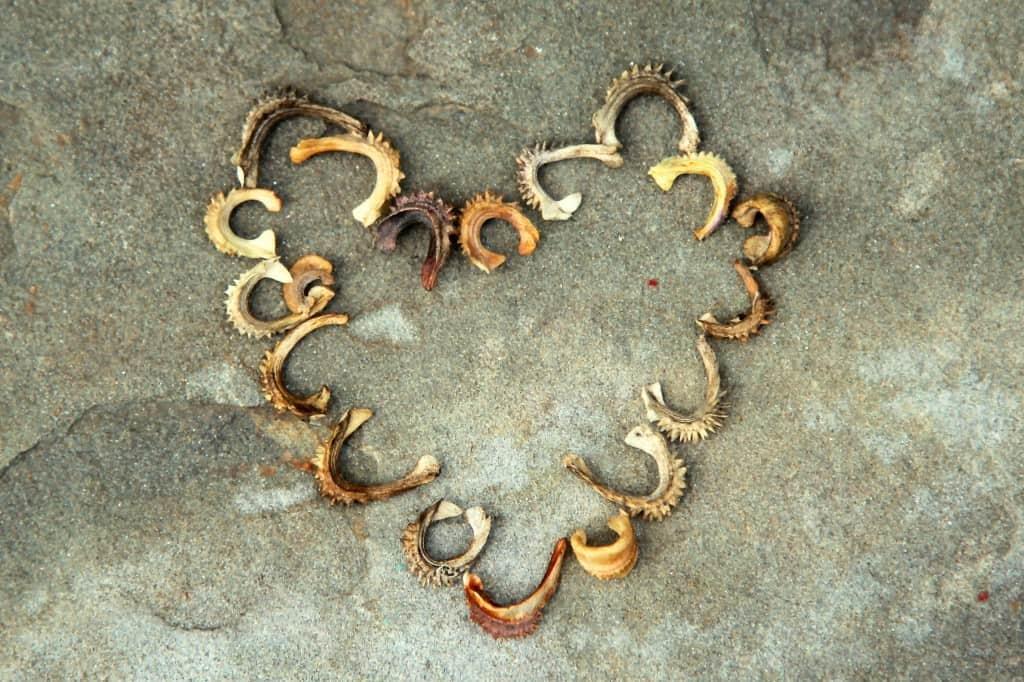 calendula seed heart